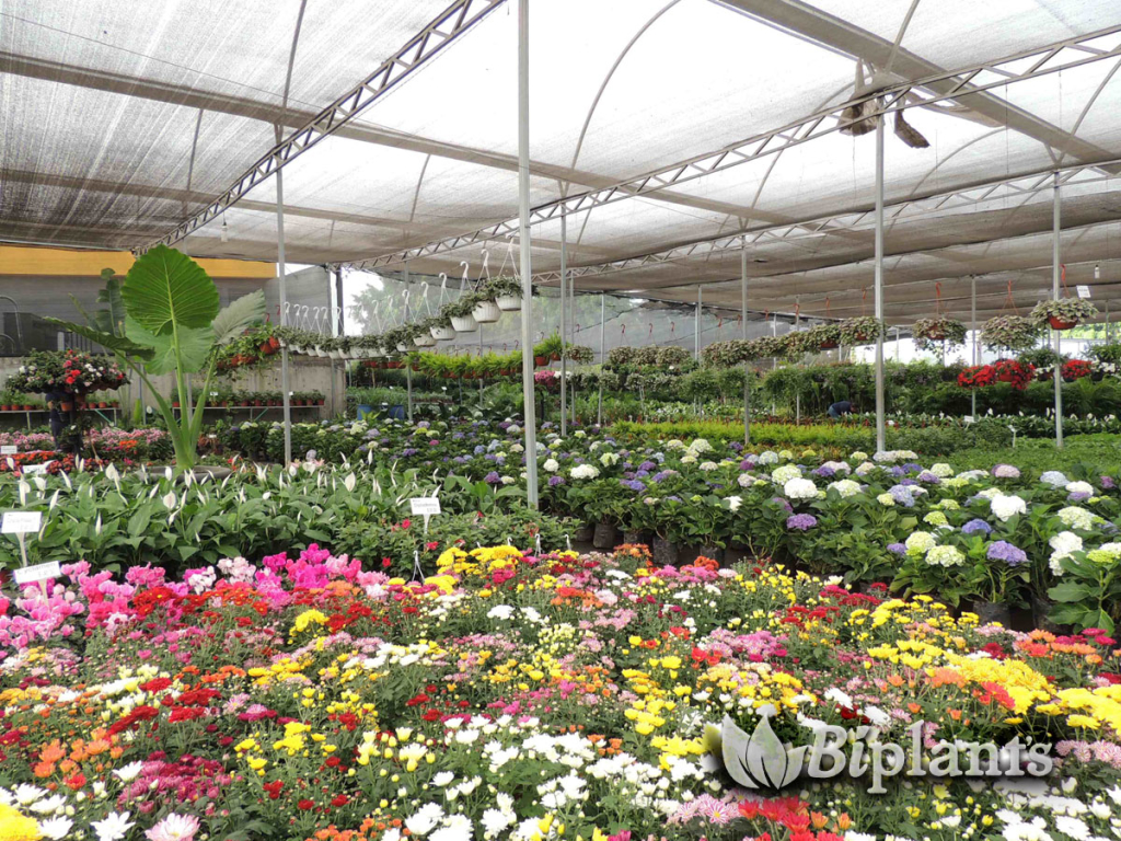 Vivero ornamental biplants for Produccion de viveros